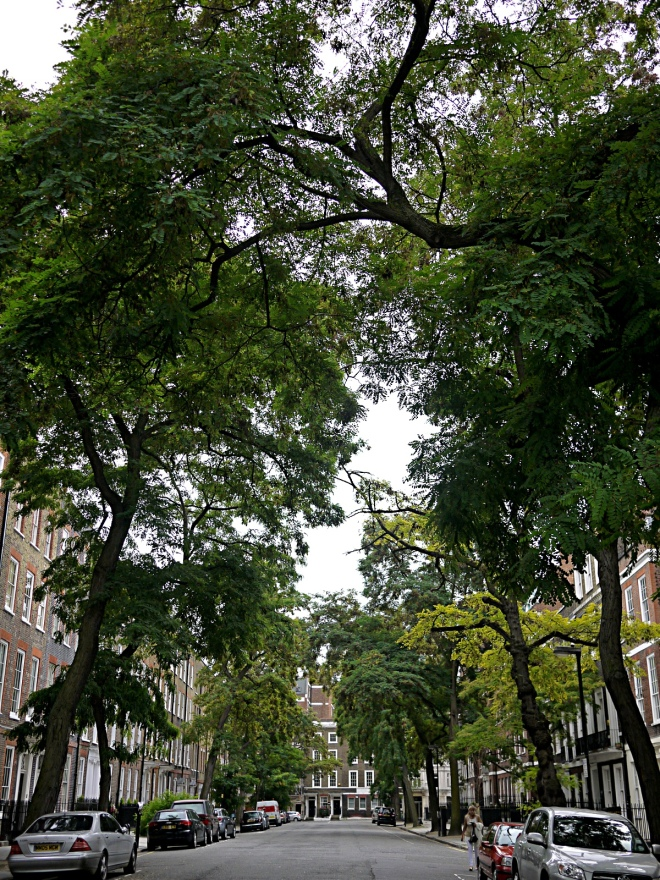 Robinia Pseodoacacia avenue on Bedford Row