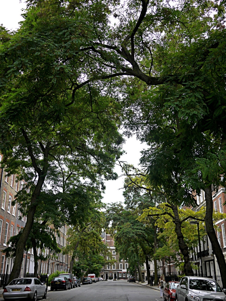 Robinia Pseodoacacia avenue on Bedford Row