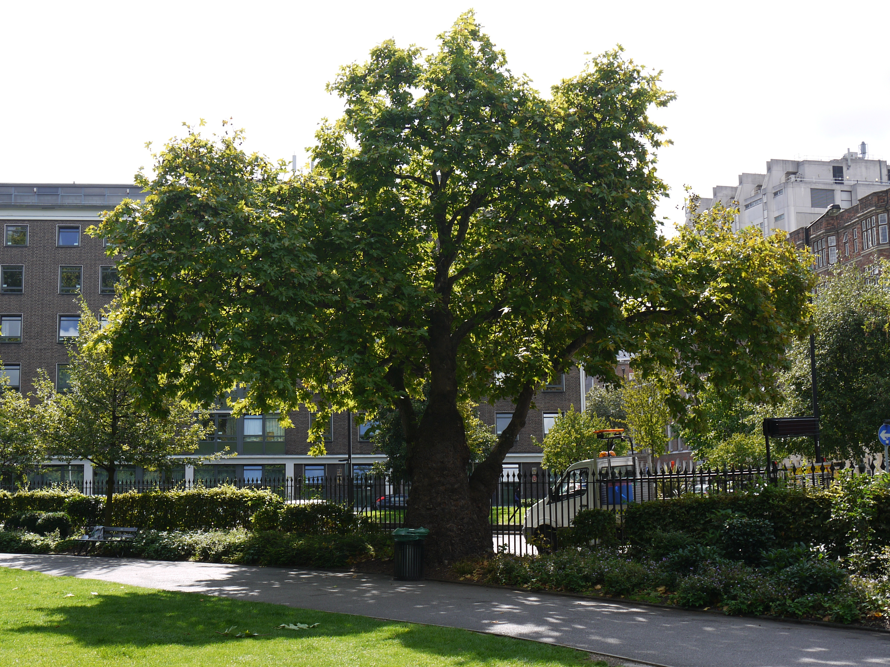 On another plane the street tree for Garden trees london
