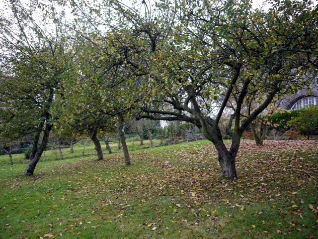 Orchard, St Josephs