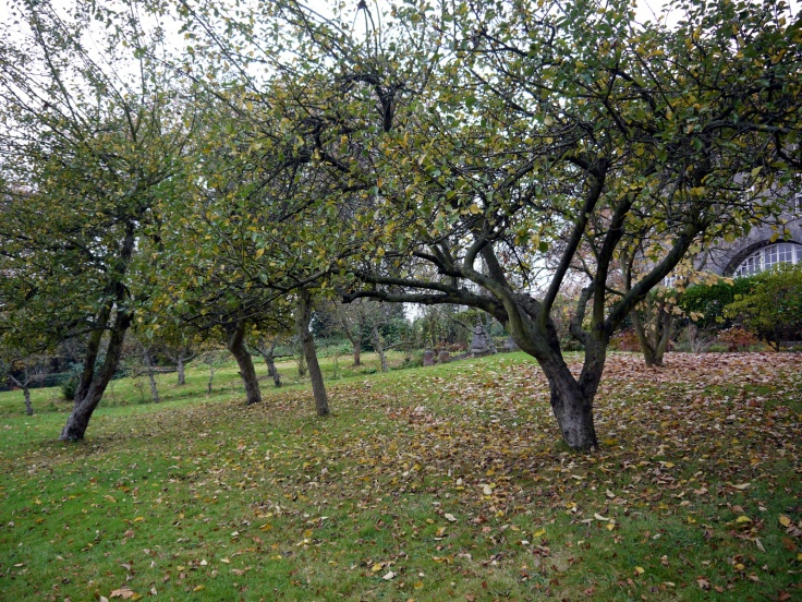 Orchard, St Josephs