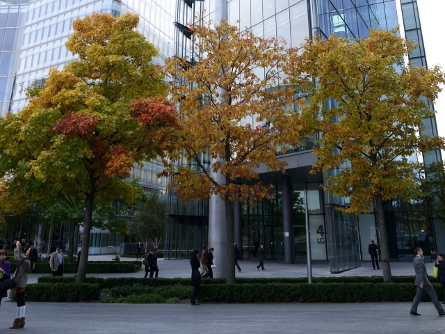 Red Oaks (Quercus rubra), More London