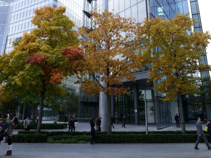 Red Oaks (Quercus rubra), More London