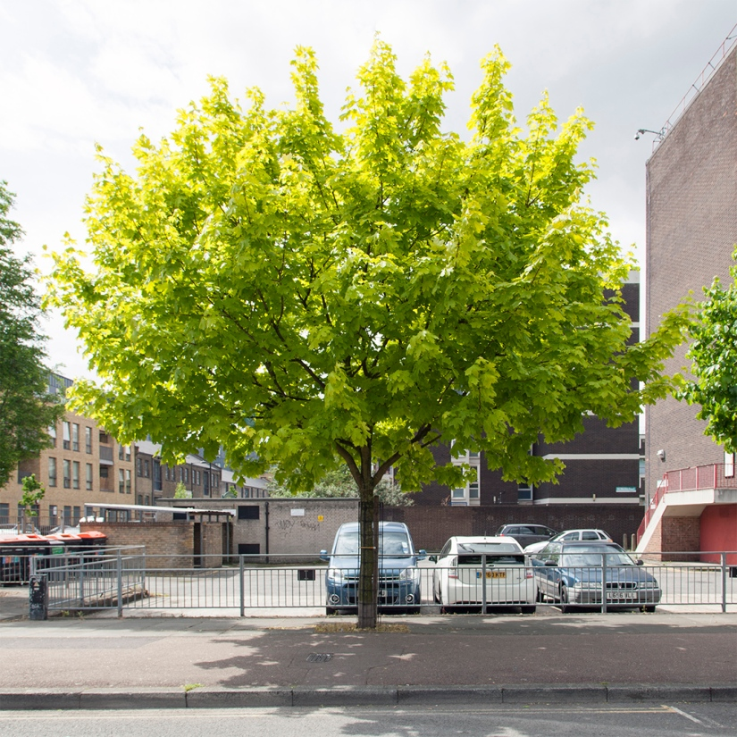 Five of the Best London Boroughs for Street Trees