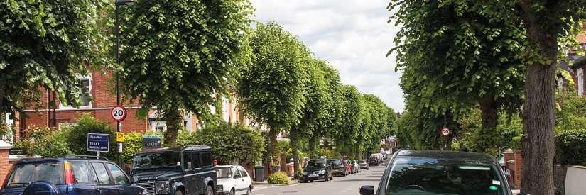 Street Tree Walks, Talks and Other Events
