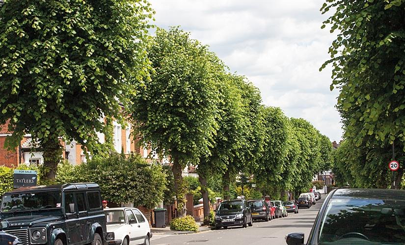 Street Trees The Street Tree
