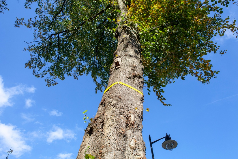 Sheffield's tree protestors show stainlesssteel
