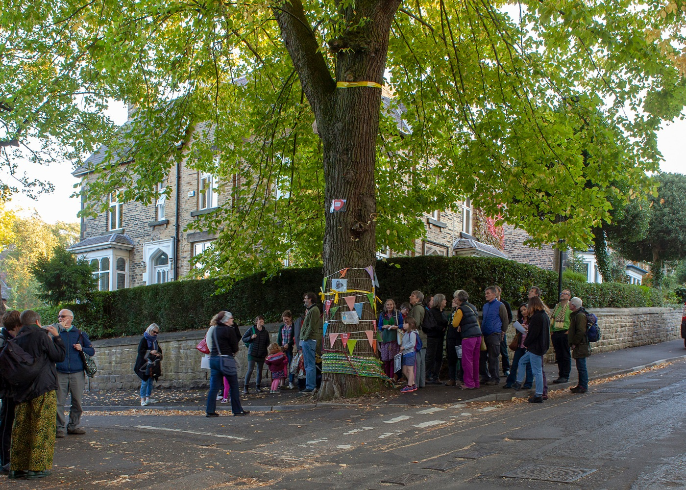 Great and Good: Sheffield's famous Chelsea Road Elm